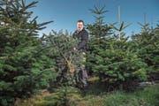 Guido Wicki pflanzt vor allem Nordmanntannen an. Wegen deren tiefen Wurzeln überstanden diese den Hitzesommer besser. (Bild: Pius Amrein (Römerswil, 22. November 2018))