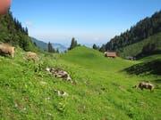 Die Alp Wangi auf 1500 M.ü.M auf Klewenalp wird mit einer Naturstrasse erschlossen. (Bild: PD)