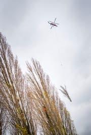 Der Helikopter transportiert die Pappeln ab. (Bild: Andrea Stalder)