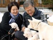 Hunde-Diplomatie: Die Pungsan-Hündin Gomi war ein Geschenk des nordkoreanischen Machthabers Kim Jong Un an den südkoreanischen Präsidenten Moon Jae In. Nun hat sie einen Wurf Welpen geboren. (Bild: KEYSTONE/EPA YNA / CHEONG WA DAE PRESS/CHEONG WA DAE PRESS /HAND)