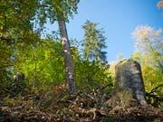 In der Schweiz gehört der Wald fast 250'000 Eigentümerinnen und Eigentümern, wie eine Analyse des Bundesamtes für Umwelt zeigt. (Bild: KEYSTONE/MELANIE DUCHENE)