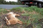 Nicht jeder Unfall mit einem Tier wird gemeldet – obwohl das gesetzlich Pflicht wäre. (Bild: Ingo Bartussek)