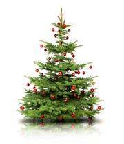 Wer einen Tannenbaum kaufen will, wird bei den Landwirten in der Region fündig.