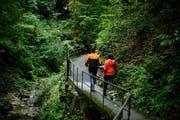Im Kanton Schwyz kämpft man gegen eingeschleppte Pflanzen. Genau wie im Kanton Zug, aus dem dieses Bild stammt. (Bild: Stefan Kaiser)