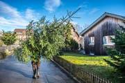 Peter Schildknecht aus Mörschwil bietet auf seinem Hof in Beggetwil frisch geschnittene Tannenbäume feil. Er ist einer von vielen Anbietern in der Region.