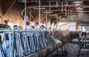 Besucher während eines Rundgang im Rahmen der Eröffnung der Swiss Future Farm in Tänikon. Eine Forscherin von Agroscope präsentiert aktuelle Forschungsprojekte zum Weidemanagement.(Bild: Andrea Stalder, 20. September 2018)
