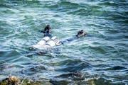 Taucher suchen den Seegrund ab.