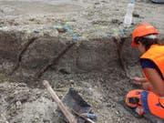 Eine Archäologin legt fast 6000-jährige Pfähle einer Palisade frei. (Bild: ARCHÄOLOGISCHER DIENST DES KANTONS BERN)