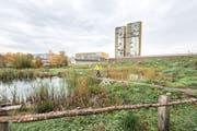Das Biotop auf dem Areal Allmend Ost. Wo einst 300 Parkplätze waren ist jetzt Natur pur. (Bild: Roger Grütter (Luzern, 6. November 2018))