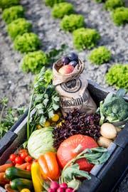 Die Boxen enthalten saisonales Gemüse.