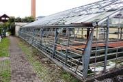 An Gartenbau erinnert bei Max Sennhausers Anlage nur noch wenig. (Bild: Chris Eggenberger)