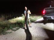 Rekordverdächtig: Die in Florida gefangene Python hat eine Länge von 5,3 Metern und ein Gewicht von rund 60 Kilo. (Bild: South Florida Water Management District/Twitter)