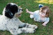 Bei Ekzem-Risiko eines Kindes wurde von Felltieren wie Hunden jahrelang abgeraten. Nun zeigte sich, dass sie eher davor schützen. (Bild: Getty)