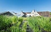 Das Kunstmuseum Thurgau in der Kartause Ittingen. Sicht von Osten an die Mönchshäuschen, die Gärtnerei und Mauer stehen dazwischen. (Bild: Andrea Stalder)
