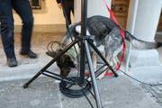 Ein Spürhund der Polizei sucht nach Sprengstoff.