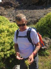 René Forrer weiss viel über die Flora der Insel. (Bild: PD)