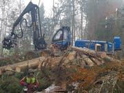 Aufräumarbeiten im Schluchwald bei Stein AR. Der Sturm «Vaia» hat in den Wäldern Appenzell Ausserrhodens Ende Oktober grosse Schäden verursacht (Bild: Kanton Appenzell Ausserrhoden)