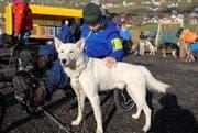 Yanick verwöhnt einen Husky mit Streicheleinheiten. (Bild: Christiana Sutter)