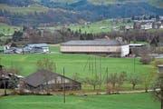 Die Micarna hat sich entschieden, einen zweiten Verarbeitungsbetrieb für Geflügel im Lerchenfeld in Bütschwil zu bauen. (Bild: Timon Kobelt)