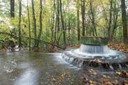 Wasser sprudelt in eine Wasserstelle der Trinkwasserproduktion in den «Langen Erlen» bei Basel. (Bild: Christian Flierl)
