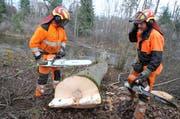 Die Forstwarte Stefan Tönz (links) und Thomas Zahner haben eine Esche gefällt. Der Baum dürfte etwa 35 Meter hoch und zwischen 80 und 100 Jahre alt gewesen sein. (Bilder: Philipp Stutz)