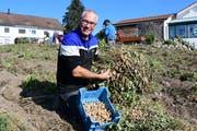 Der Märstetter Thomas Wieland erntet Erdnüsse. (Bild: Werner Lenzin)