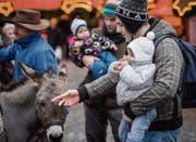 Beliebt sind die Esel, sowohl bei Gross als auch bei Klein. (Bild: Reto Martin)