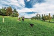 Im Frühling eröffnet auf der Tribschenhornwiese unterhalb des Wagner-Museums die dritte Hunde-Freilaufzone der Stadt Luzern. Dort dürfen Hunde ohne Leine herumtollen. (Bild: Roger Grütter (Luzern, 28. September 2017))