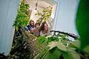 Künstler Timo Müller hat einen 18 Meter langer Baumstamm quer in der Wohnung plaziert. (Bild: Pius Amrein)