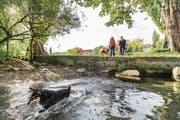 Am Tribschenhorn will die Stadt Luzern eine Freilaufzone für Hunde einrichten. (Bild: Roger Gruetter (Luzern, 28. September 2017))