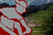 Auf das Rodelbahn-Vergnügen in der Fräkmüntegg müssen Besucher vorerst verzichten: Die Rodelbahn bleibt bis auf Weiteres geschlossen. (Symbolbild / Philipp Schmidli / Neue LZ)