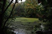 Wegen Sedimenten aus dem Dersbach verlandet der Langholzweiher zusehends. (Bild: Stefan Kaiser (Hünenberg, 26. September 2017))