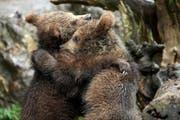 Die beiden Bären Takis und Arko. (Bild pd)