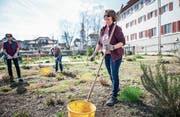 Claudia Hummel bringt den Klostergarten in Sursee auf Vordermann. (Bild: Roger Grütter (23. März 2017))