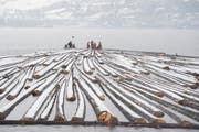 Die Baumstämme werden auf dem Ägerisee zu einem grossen Floss zusammengebunden. (Bild Maria Schmid)