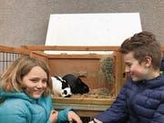 Begabt: Die Hasen von Alena und Laurin Frey