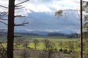 «Im Januar kein Schnee mehr in Sicht im Flachland, Kagiswiler-Moos», schreibt Leser Josef Habermacher zu seinem Bild. (Bild: Leserbild Josef Habermacher (Januar 2018))