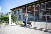 Viel Arbeit: Tierpflegerin Tabea Nigg vom Tierheim an der Ron führt einen Hund spazieren. (Bild Manuela Jans)