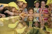 Urner Schulkinder im Naturhistorischen Museum in Bern. (Bild: PD)