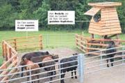 Biobauer Nils Müller aus Küsnacht ZH ist schweizweit bislang der einzige Landwirt, der seine Tiere auf eigenem Terrain töten darf. (Bild: Keystone/Forschungsstelle für biologischen Landbau (Fibl)/Gabriela Müller)