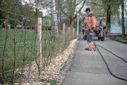 Beim Churchill-Park wurden bereits die Heckenabgrenzungen für die Freilaufzone erstellt. (Bild: Pius Amrein (Luzern, 18. April 2017))