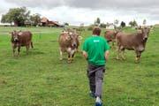 Ein Bio-Bauer läuft zu den Kühen auf seinem Hof in Oberwil-Lieli im Kanton Aargau. (Bild: Keystone/Dominic Steinmann)
