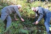 Regierungsrat Paul Federer (rechts) und Kantonsoberförster Peter Lienert pflanzen eine Weisstanne. (Bild PD)