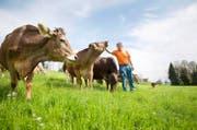 Biobauer Josef Bircher bei seinen Kühen auf der Wiese in Malters. (Bild: Manuela Jans-Koch / Neue LZ)