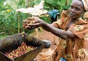 Kaffeebohnen aus Uganda – solche Produkte können durch Crowdordering nach Hause bestellt werden. (Bild: Simon Rawles/Getty)