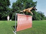 Vreni Reding trainiert mit ihrer Belgischen Schäferhündin Quga regelmässig auf dem Gelände ihrer eigenen Hundeschule Wyden in Menzingen. (Bild: Stefan Kaiser (Zuger Zeitung) (Zuger Zeitung))
