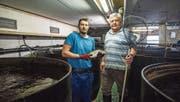 Kurt Bigler und sein Vater Werner in der Fischmastanlage in einer umfunktionierten Hühnerhalle. (Bild: Dominik Wunderli (Malters, 4. April 2017))