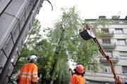 Der Sturm fällt diesen Baum in der Stadt Luzern. (Symbolbild Pius Amrein)