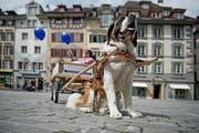 «Barry on Tour» am 29. April auf dem Kornmarkt in Luzern. (Bild: Pius Amrein)