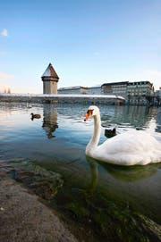 Die Aussenwahrnehmung Luzerns ist stark vom Tourismus geprägt. Hier die Kapellbrücke mit Wasserturm. (Archivbild Manuela Jans)